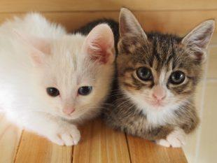 かわいい猫かわいい